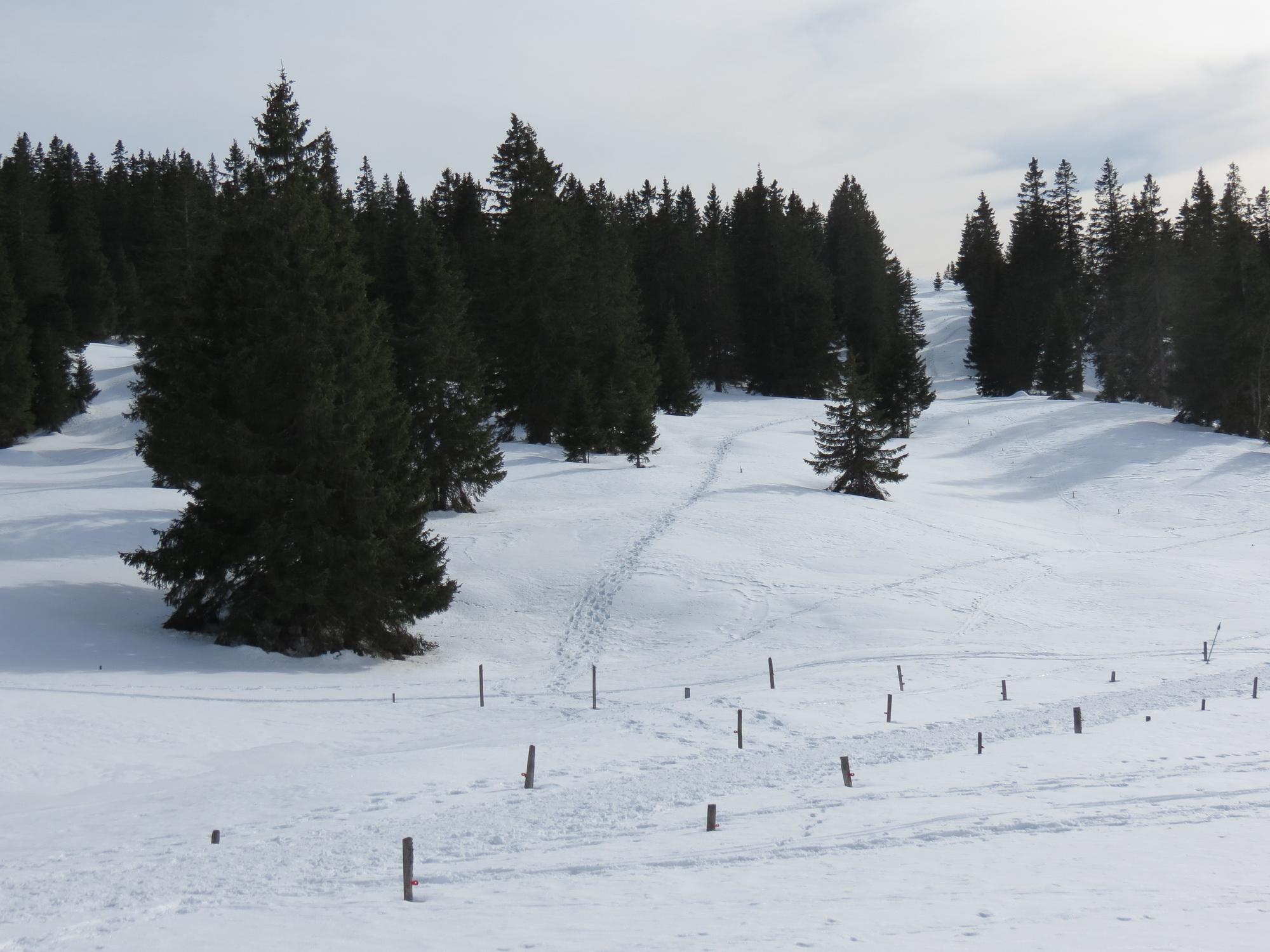 Mont-Tendre hivernal à travers les forêts et pâturages